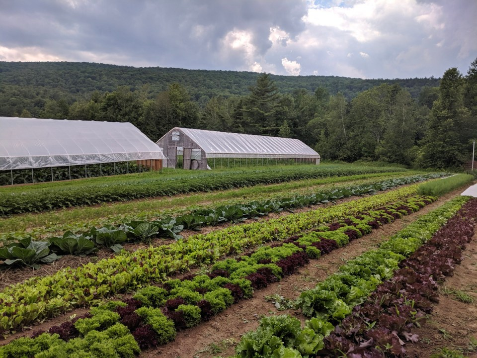 View of crops and hoop houses at Footprint Farm in Starksboro Vermont