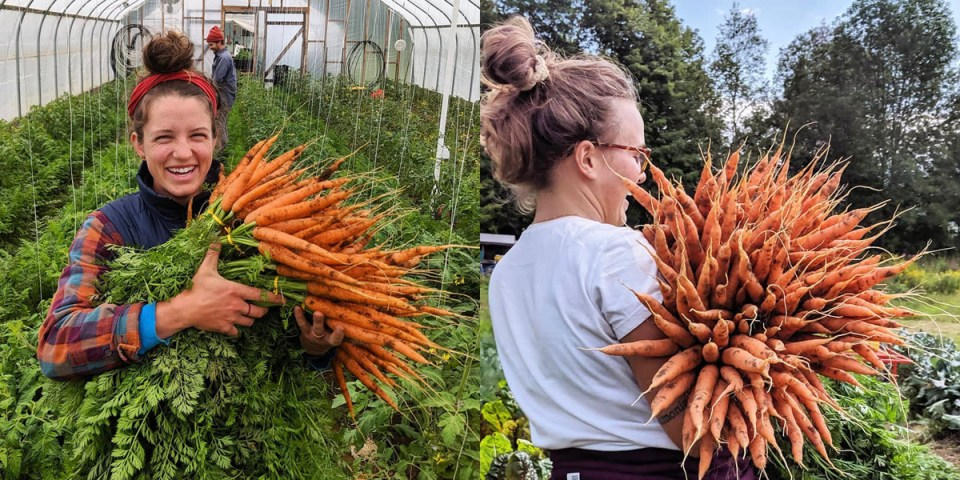 Taylor Mendell of Footprint Farm in Starksboro Vermont posing with huge bouquets of carrots
