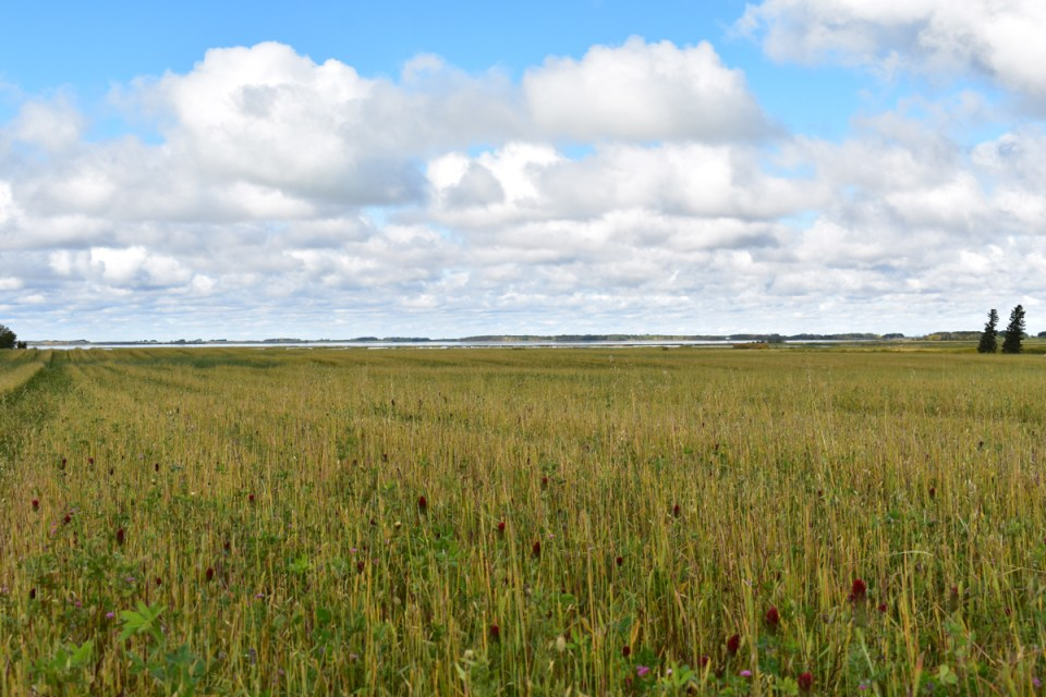 Crop fields at Legend Organic