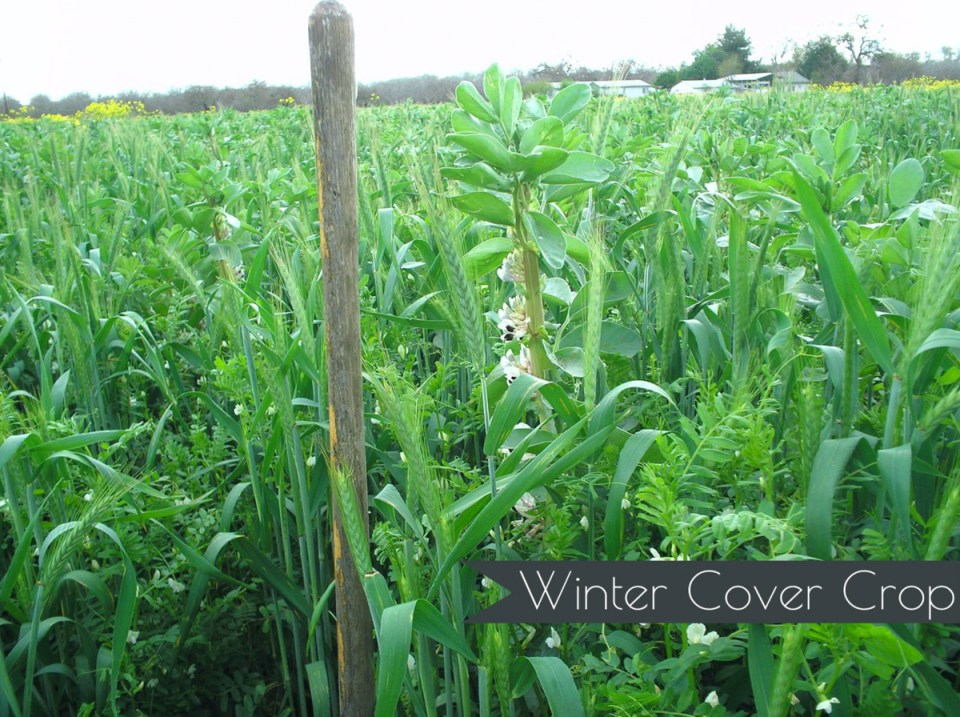 Winter Cover Crop
