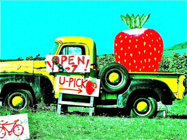 Swanton Berry Farm strawberry sign
