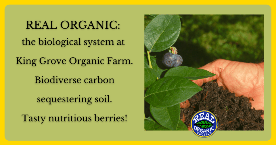 """A light green background with text reading"""" Real Organic: the biological system at King Grove Organic Farm, biodiverse carbon sequestering soil, tasty nutritious berries"""" along a photo of a hand holding soil next to ripe blueberries."""