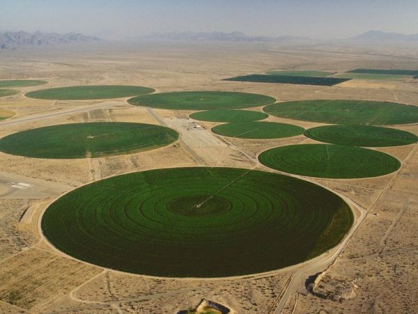 An areal image of center pivot irrigation showing several very large green circles surrounded by dry brown foliage.