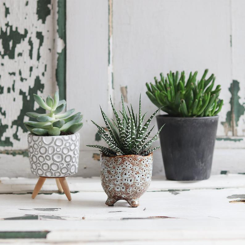 Monthly Indoor Plant Delivery Subscription
