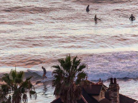 collaroy surfer