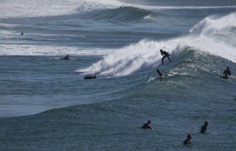 curl curl beach surfinjg