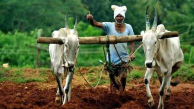 Chhattisgarh, Government, Farmers, Waiving short-term agricultural debt,