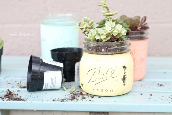 Chalky-Painted-Mason-Jar-Potted-Succulents-600x400