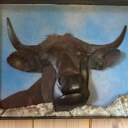 41-vache-aubrac-au-pre