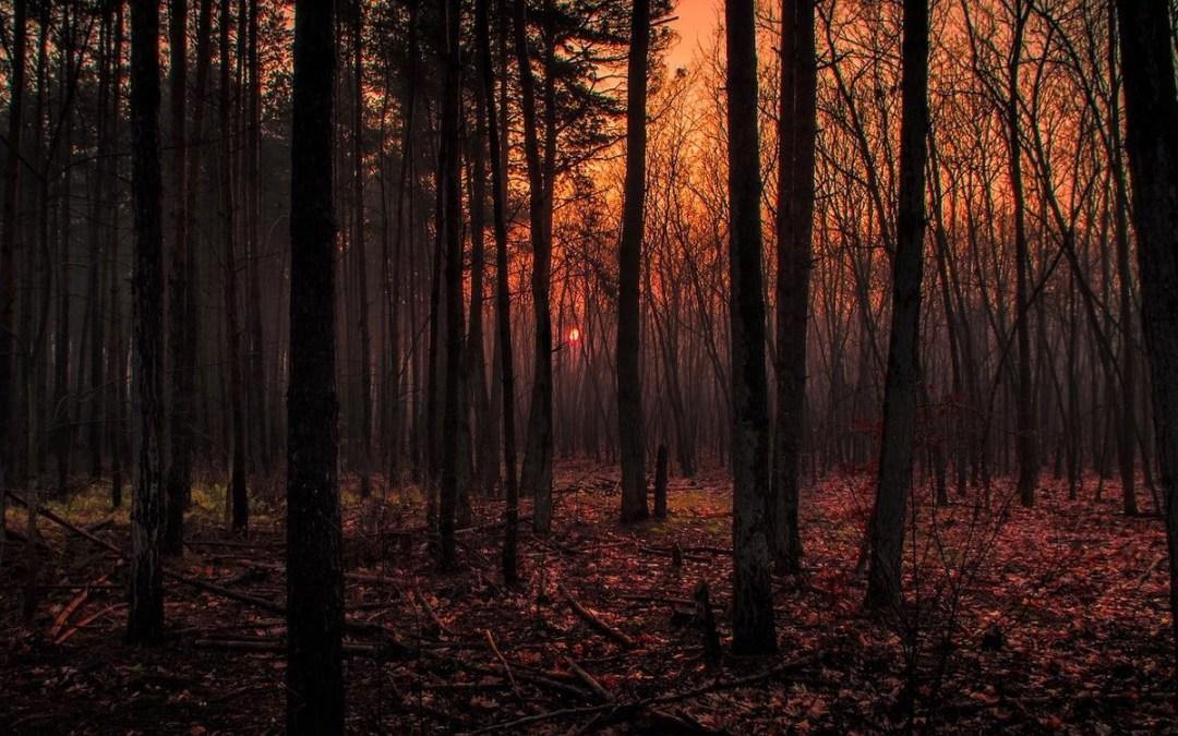 The Magic of Twilight, the Suspense of Dawn