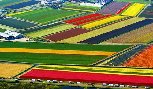 Tulip Fields, Lisse, Netherlands