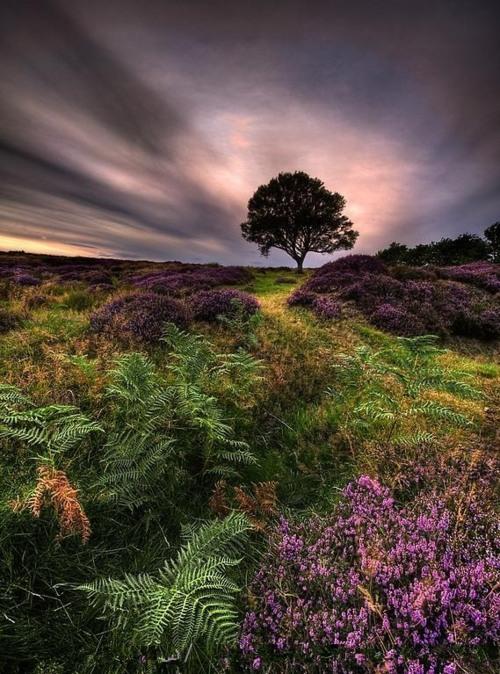 Purple Tarn, North Yorkshire Moor, England