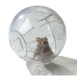 HAMSTER EXERCISE BALL 170mm