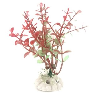 PP011A4 Plastic Plant Baby Tear Red 125mm at Rebel Pets