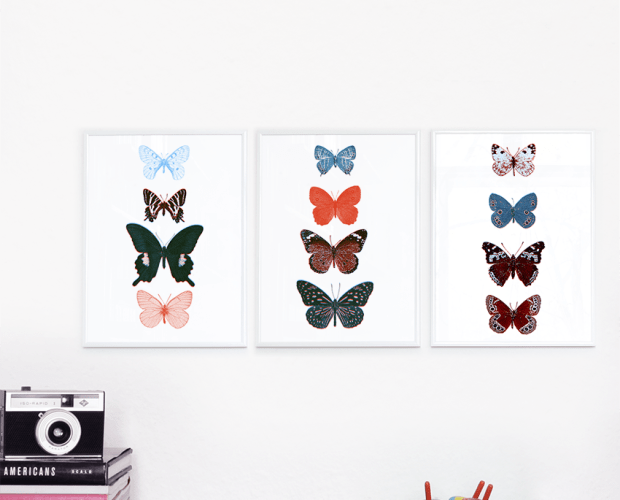 3 screen prints of butterflies framed