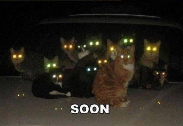 soon cats