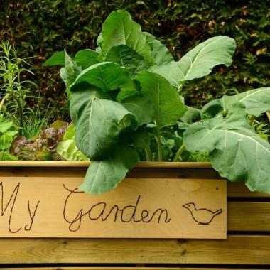 7 Kitchen Scraps to Save for your Garden