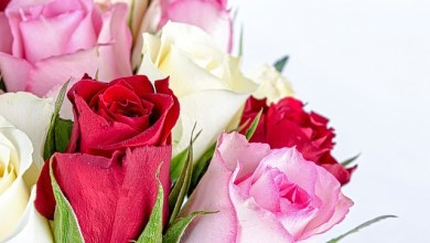 Photo of Top 5 Best Flowers For Your Sibling For Their Special Day !!