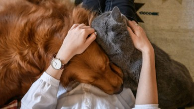 Photo of How to Be the Best Pet Parent