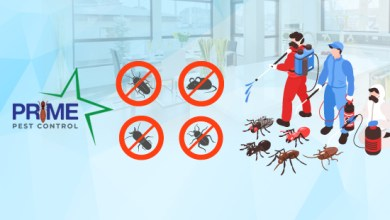 Photo of Why Prime Pest Control Is Leading In Industry?