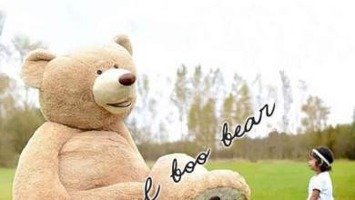 Photo of The Wonder tale to Giant Teddy Bears