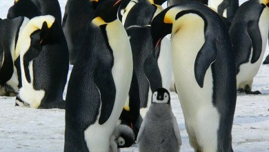 Photo of What is Google Penguin? How can you use it to boost your conversions?