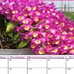Calendário Fevereiro 2016