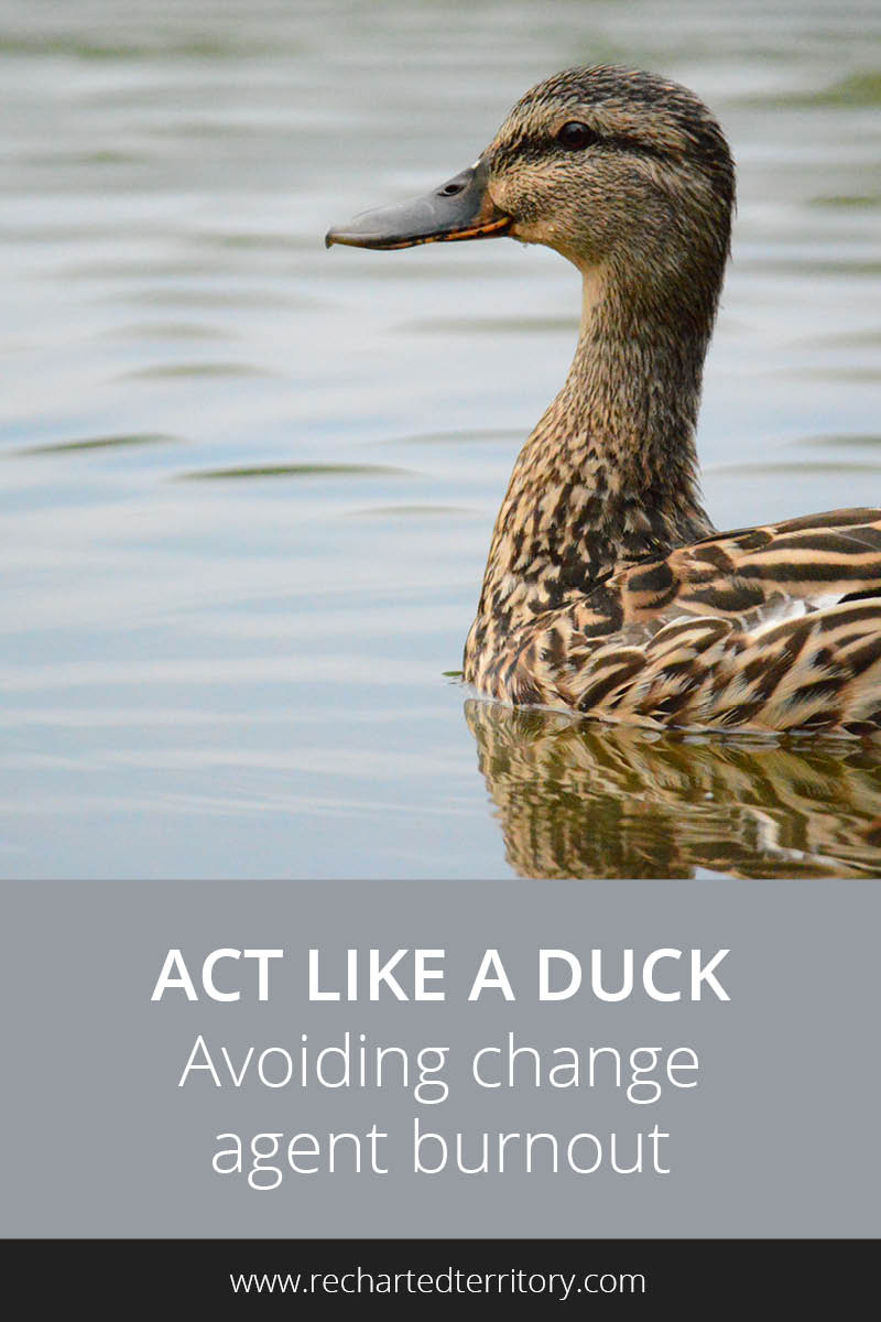 Act like a duck - Avoiding change agent burnout