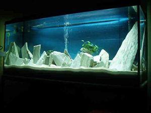 Ardoise décorative pour Terrarium Blanc Naturel 15 kg