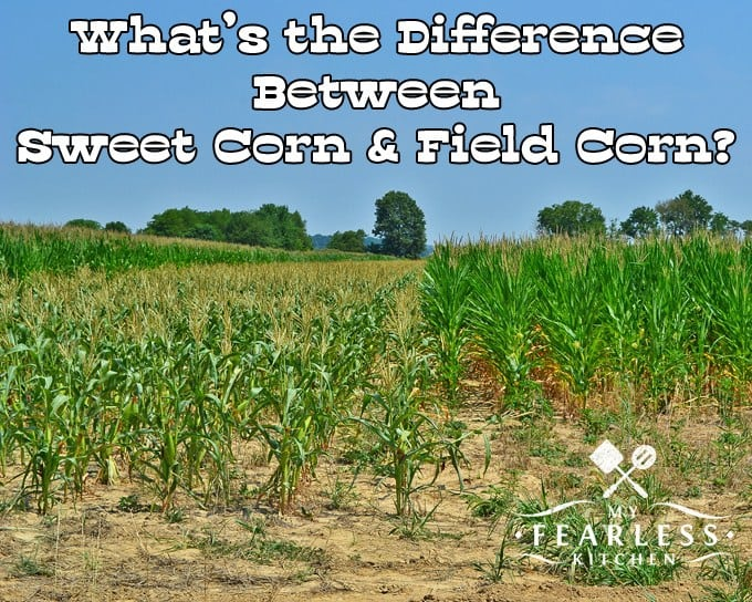 What is the difference between sweet corn and field corn