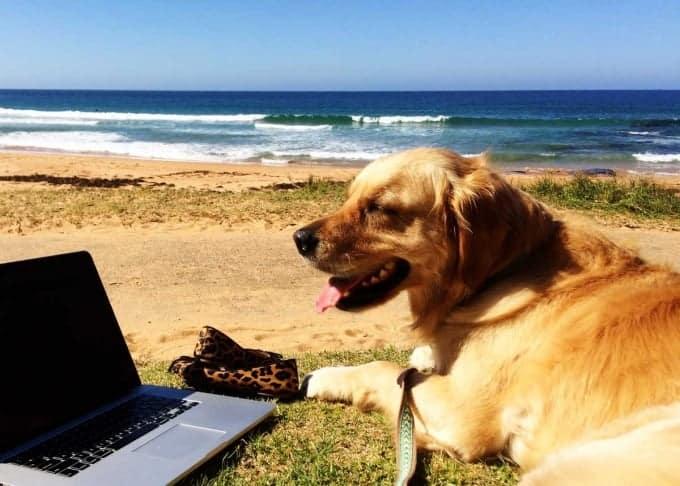 Dozer-working-Bilgola-Beach2