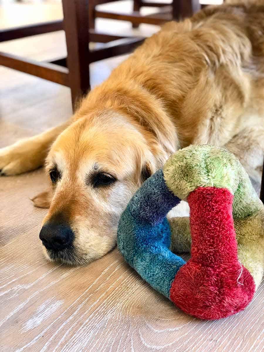 Dozer stole Bennie's toy