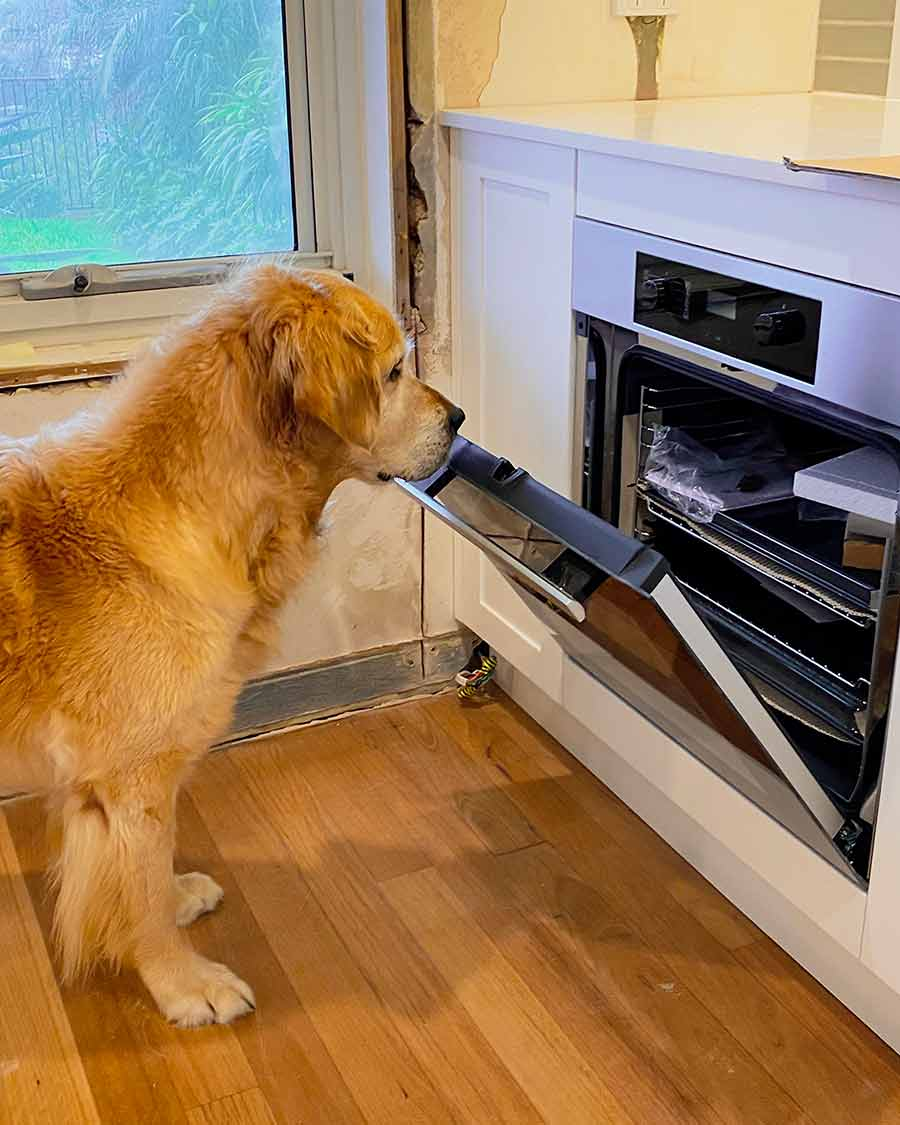 Dozer checking out new kitchen oven