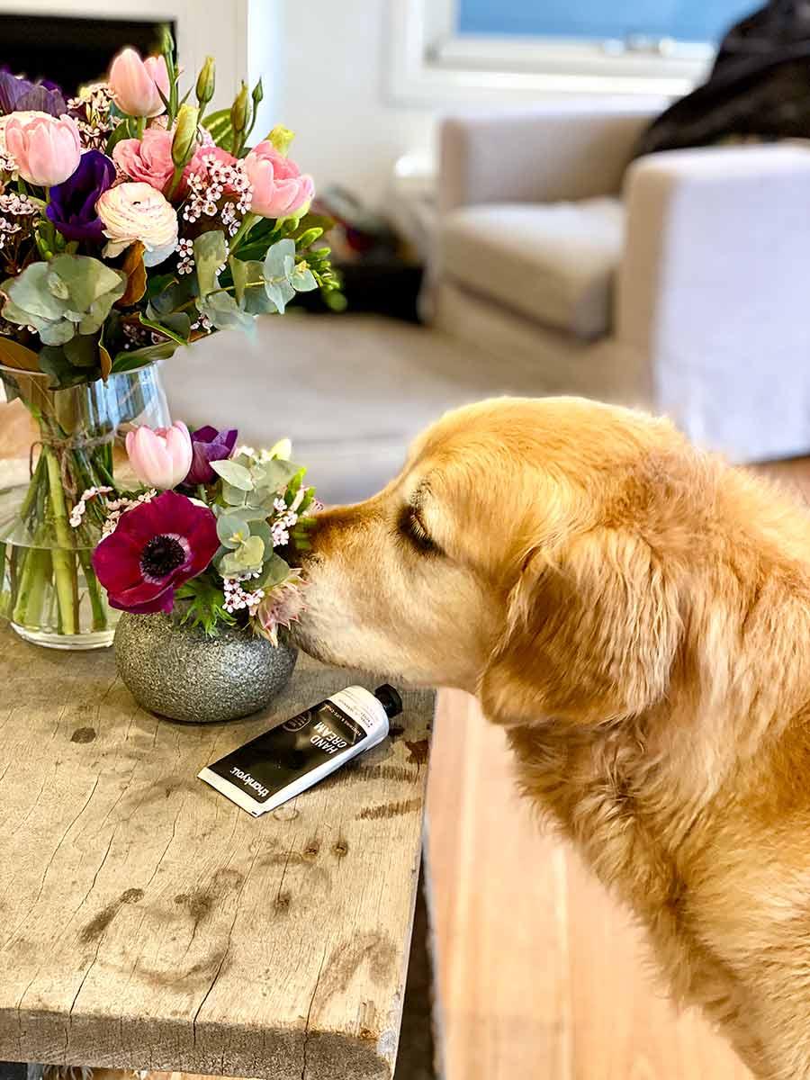 Dozer-snuffling-flowers