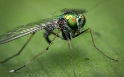 La Dengue, febbre dell'Asia. Prevenzione, sintomi, cura, guarigione, testimonianze.