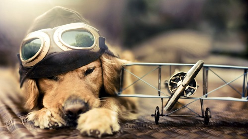 perro-avion-Wallpaperhd.es_