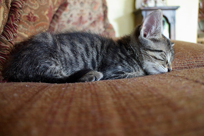 Quick and Easy Ways to Remove Pet Hair