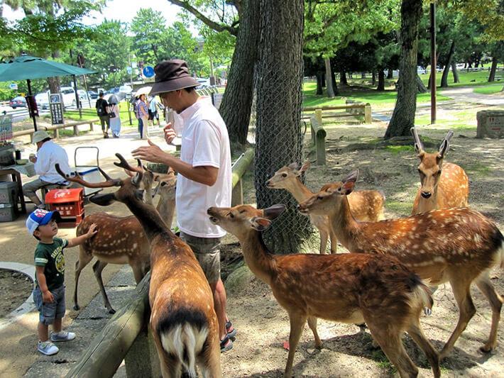 Nara Park, Nara City