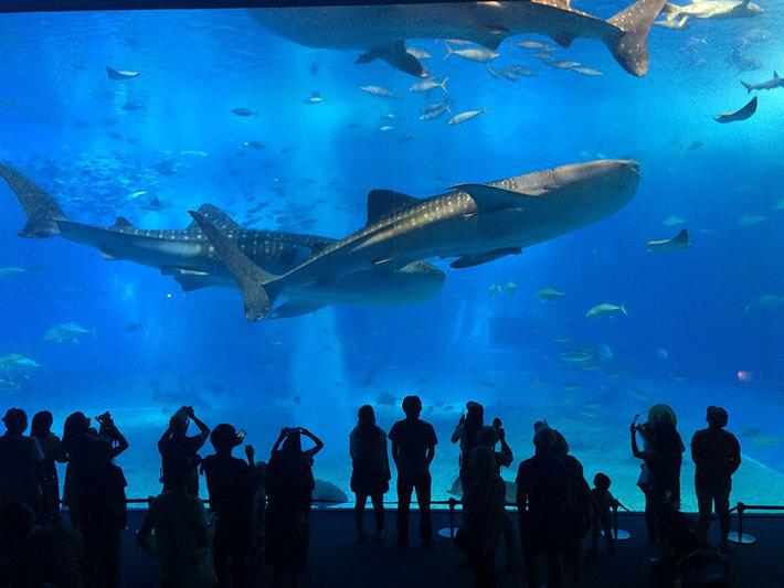 Okinawa Churaumi Aquarium, Kunigami