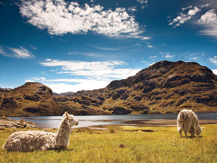 El Cajas National Park