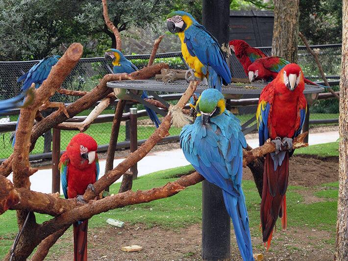 Bird Garden, Naples - Florida