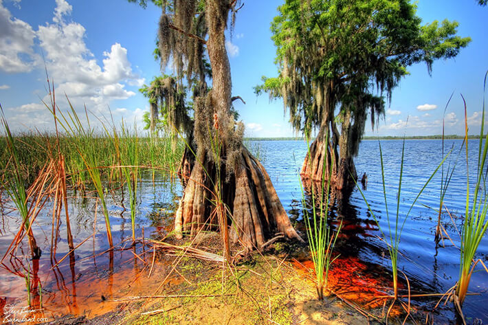Conservancy of south Florida