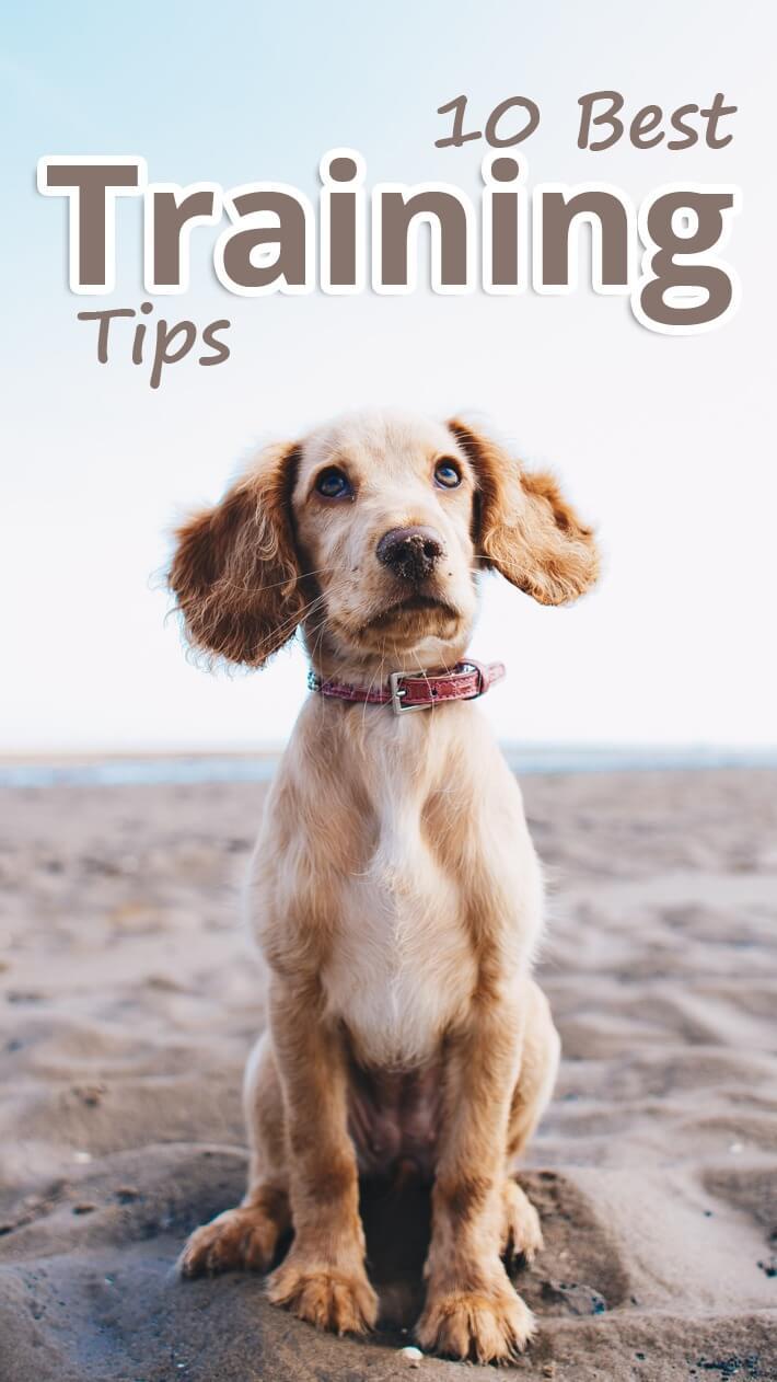 10 Best Dog Training Tips
