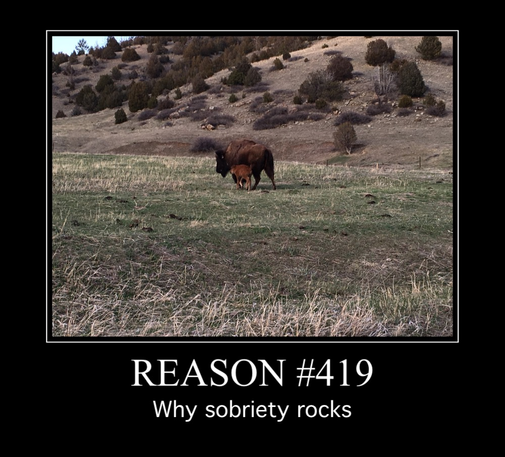 31 Best Sobriety Memes Images Sobriety Recovery Quotes