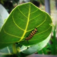 Caterpillar Recovery Warriors Blog