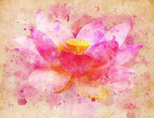 lotus compassion