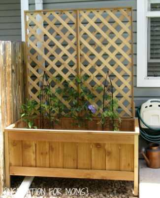 view+of+trellis+on+cedar+planter
