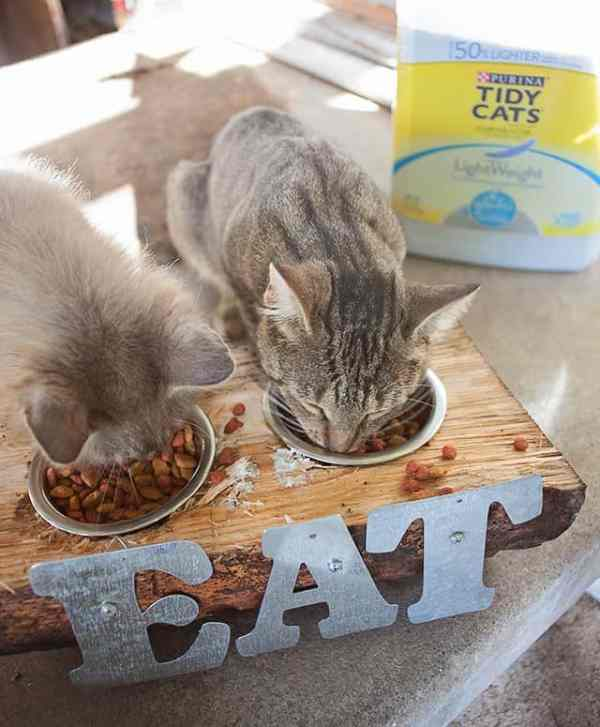 Upcycle-Cat-Bowls-11
