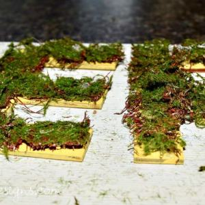 letters painted with Fusion Mineral Paint in Little Star with moss on them