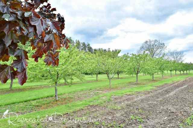 fruit trees in the Niagara Escarpment region of Ontario